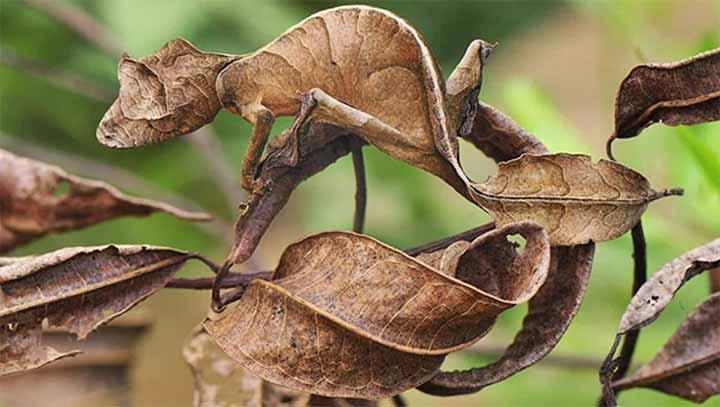 amazing-camouflaged-animals-02