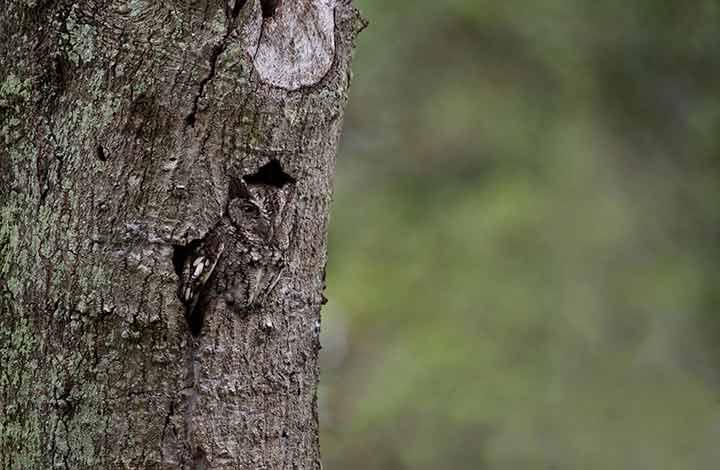 amazing-camouflaged-animals-07