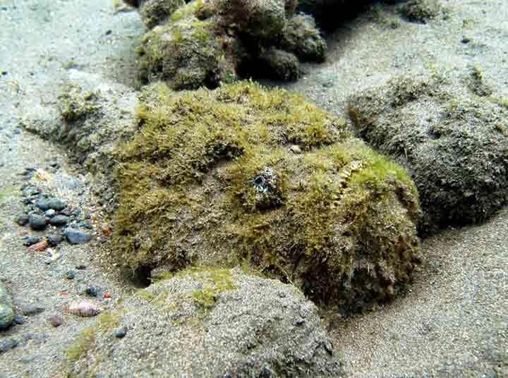amazing-camouflaged-animals-08