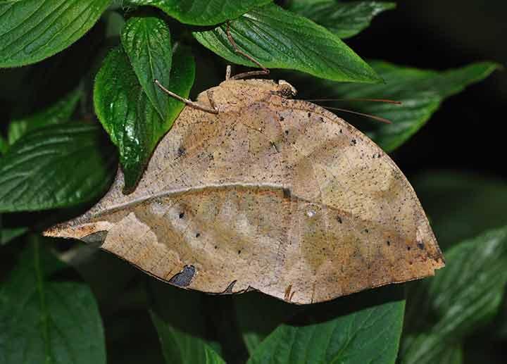 amazing-camouflaged-animals-09