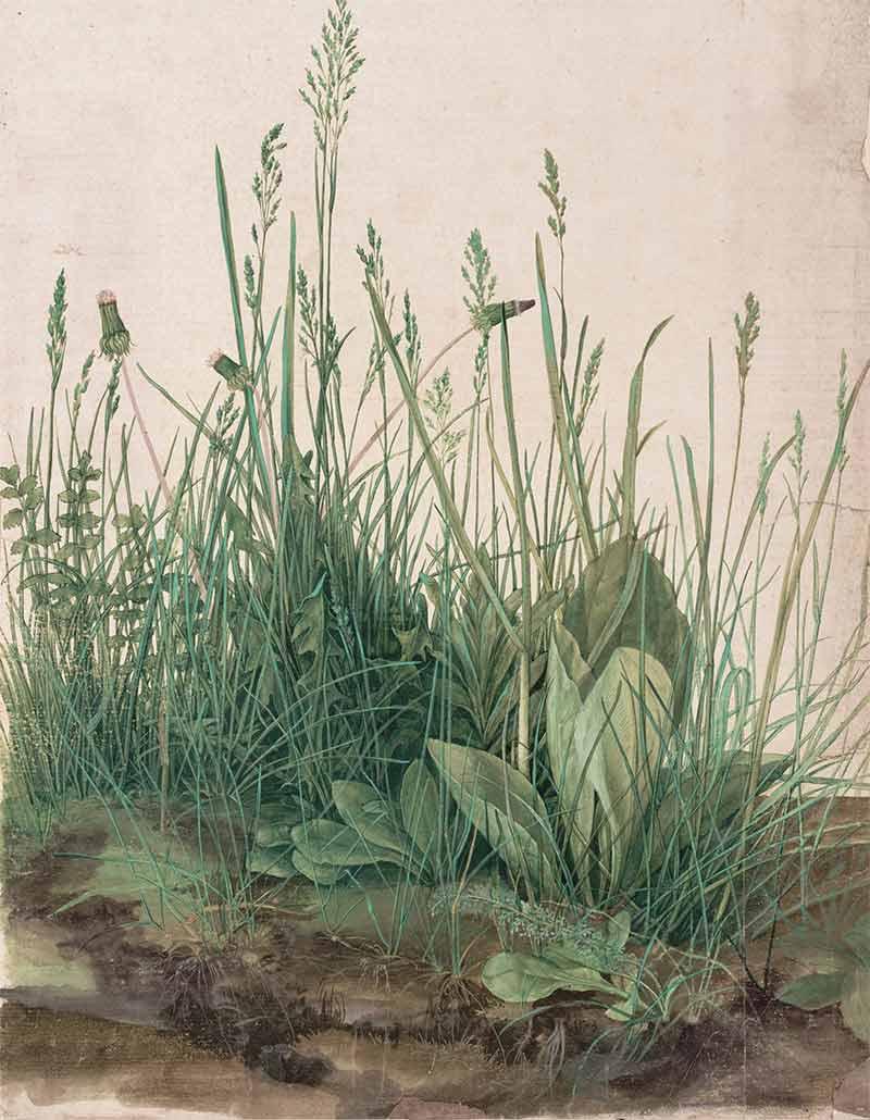 albrecht-durer-watercolor-paintings-04