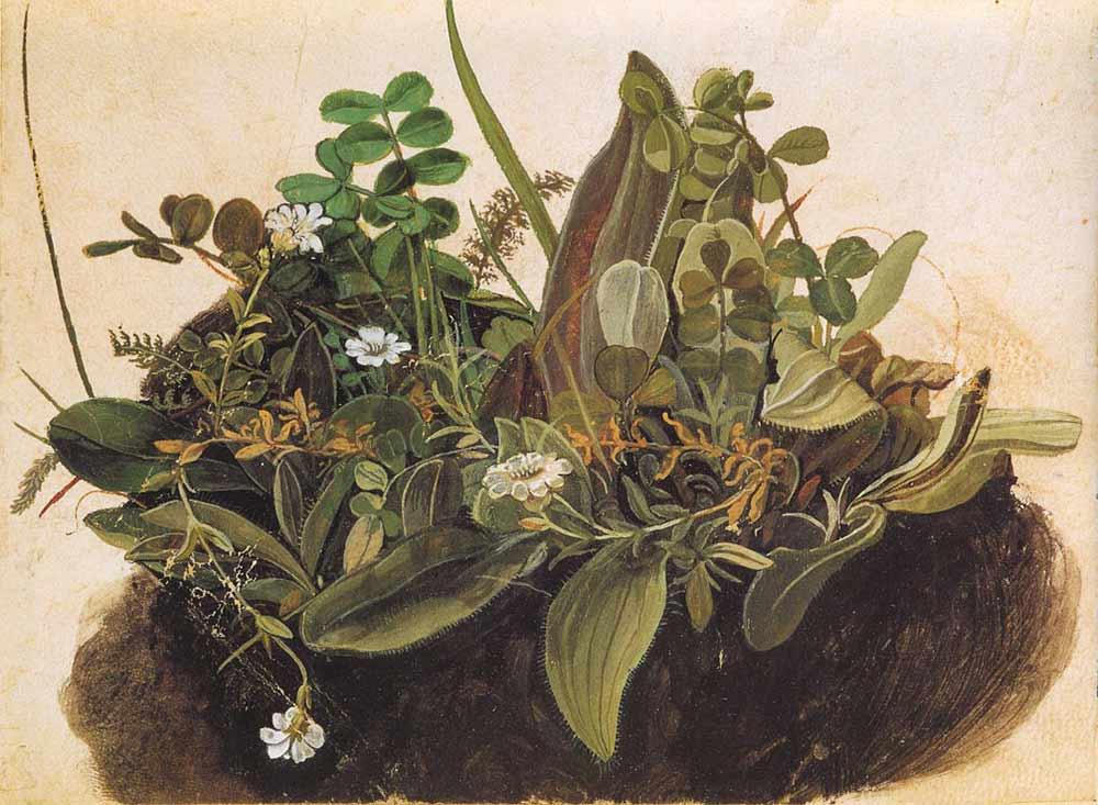 albrecht-durer-watercolor-paintings-06
