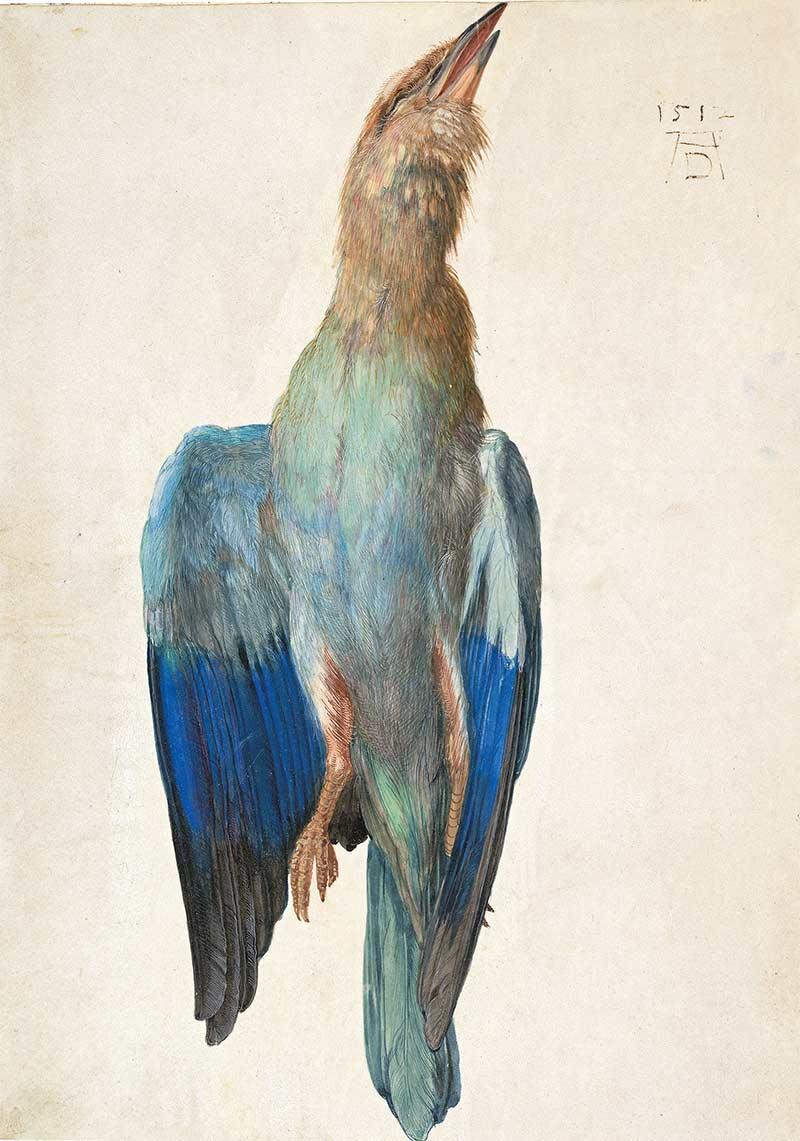 albrecht-durer-watercolor-paintings-08