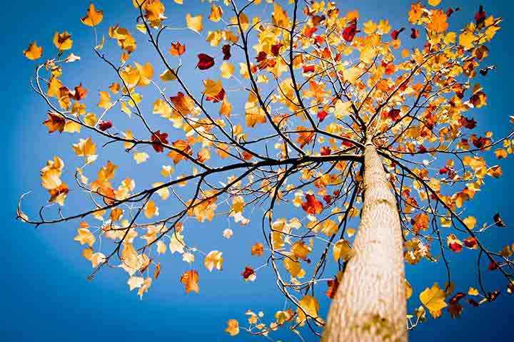 blue-autumn-sky-3