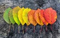 ทำไมใบไม้จึงเปลี่ยนสีในฤดูใบไม้ร่วงกับ 10 สถานที่ใบไม้เปลี่ยนสีสวยที่สุด