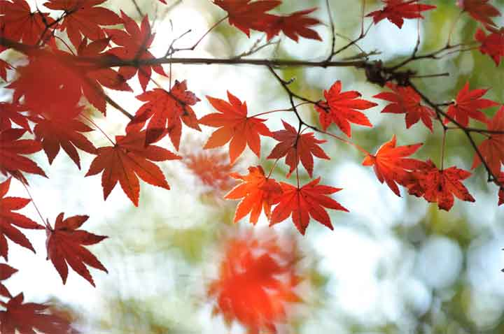 leaves-change-color-02
