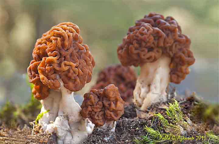 20-bizarre-and-beautiful-mushrooms-073