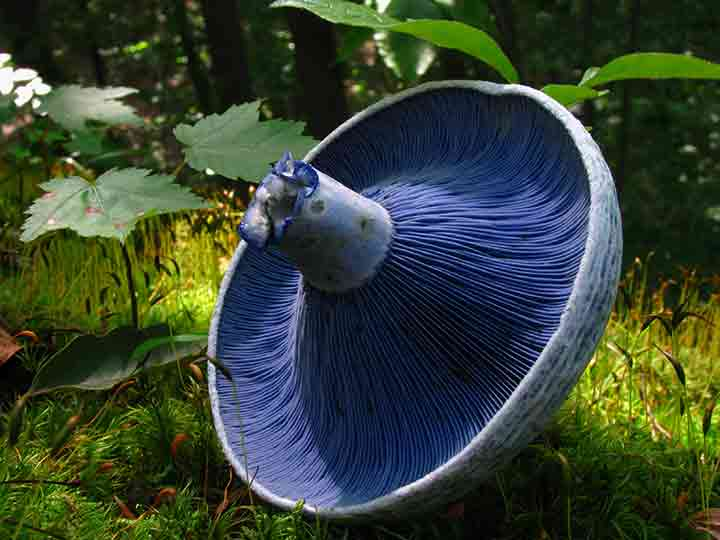 20-bizarre-and-beautiful-mushrooms-131