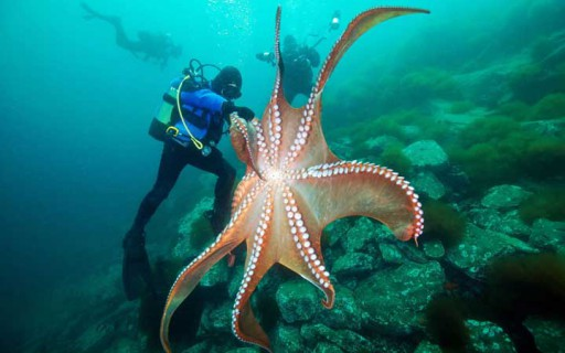 10 สัตว์ทะเลที่ตัวใหญ่มหึมาชนิดที่หากได้เห็นตัวจริงคุณจะต้องตกตะลึง