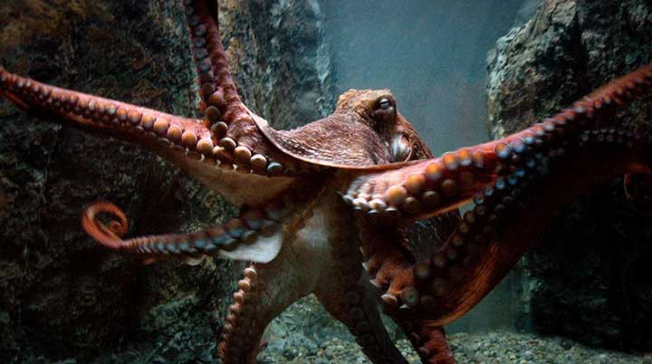 10-largest-living-creatures-in-the-sea-07