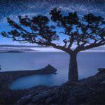 10 เรื่องจริงที่น่าสนใจของต้นไม้บนโลกที่คุณอาจไม่เคยรู้มาก่อน