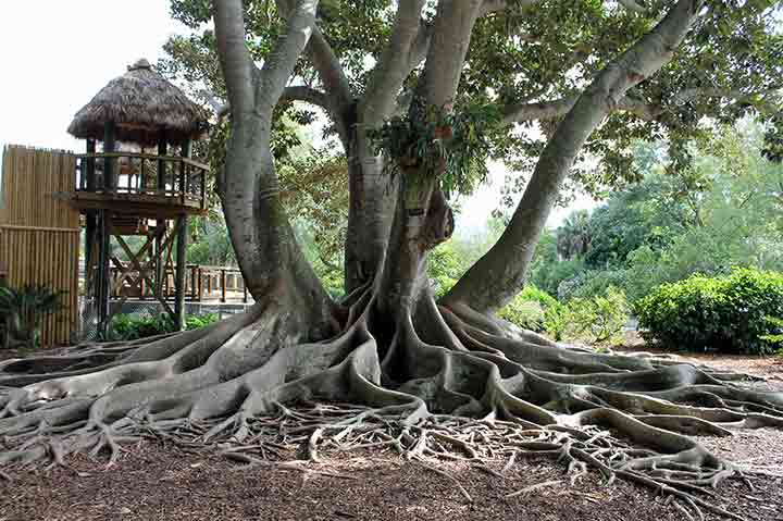 10-facts-about-trees-08