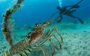 10-fascinating-lobster-facts-01