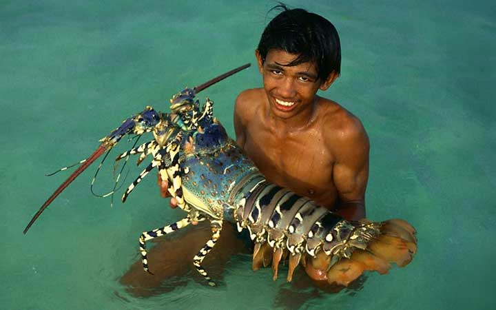 10-fascinating-lobster-facts-02