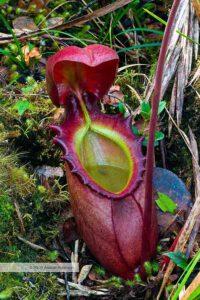 10-most-strangest-plants-05