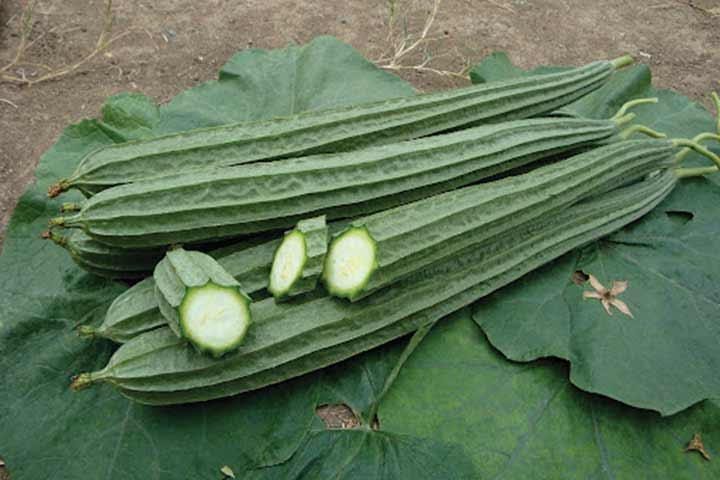 10-vegetables-that-are-actually-fruits-06