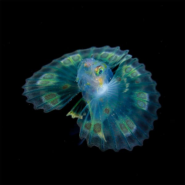 creatures-of-the-night-sea-10