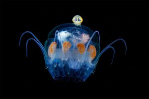 creatures-of-the-night-sea-15