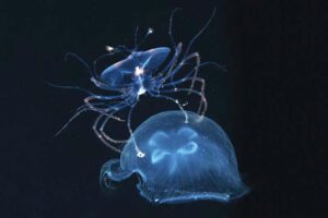 creatures-of-the-night-sea-16