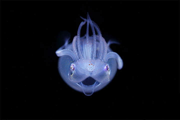 creatures-of-the-night-sea-19