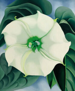 georgia-o'keeffe-flower-paintings-04