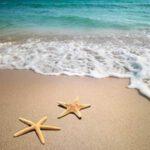 """10 เรื่องจริงน่าทึ่งของ """"ปลาดาว"""" สิ่งมีชีวิตมากสีสันแห่งท้องทะเล"""