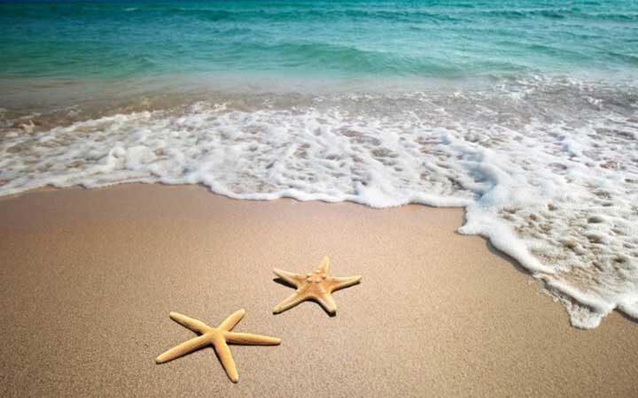 starfish-00